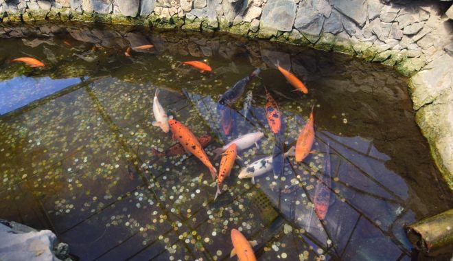 Fontana di Trevi de la Delfinariul din Constanța. Viața peștilor, în pericol din cauza superstițiilor - microrezervatie31-1533639592.jpg