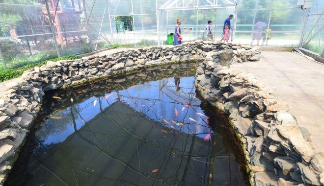 Fontana di Trevi de la Delfinariul din Constanța. Viața peștilor, în pericol din cauza superstițiilor - microrezervatie33-1533639609.jpg