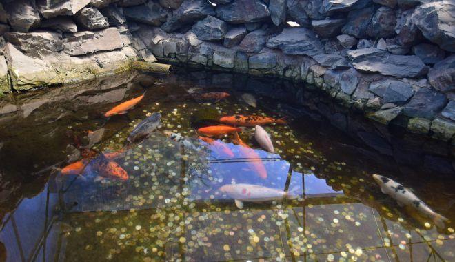 Fontana di Trevi de la Delfinariul din Constanța. Viața peștilor, în pericol din cauza superstițiilor - microrezervatie37-1533639713.jpg