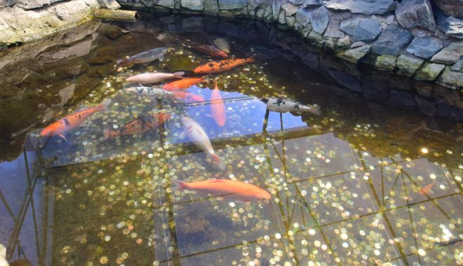 Fontana di Trevi de la Delfinariul din Constanța. Viața peștilor, în pericol din cauza superstițiilor - microrezervatie39-1533639700.jpg