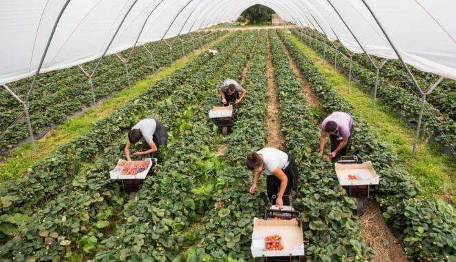Ministerul alocă fonduri importante pentru agricultura ecologică - ministerulagriculturii-1617546157.jpg