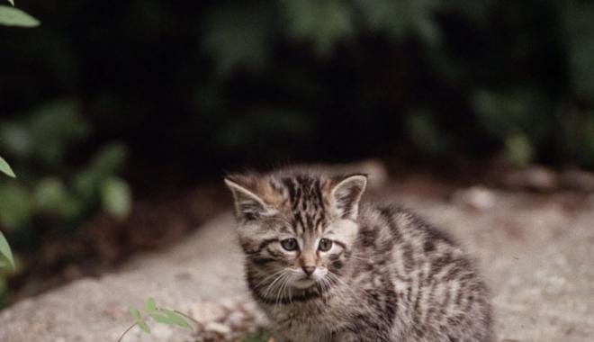 Ministerul Mediului propune împușcarea a 1691 de animale sălbatice strict protejate! - ministerulmediului-1475065095.jpg