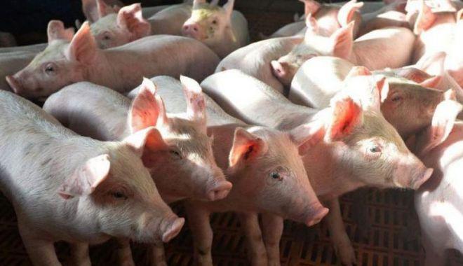 Ministrul Agriculturii vine cu precizări pentru crescătorii de porci - ministrulagriculturiivinecu-1613317324.jpg