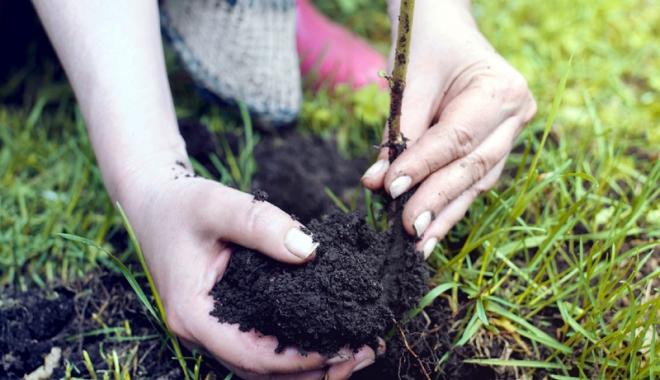 Foto: Mobilizatron - Ajutăm România să respire. 4.800 de puieţi plantaţi, în week-end, la Eforie Nord