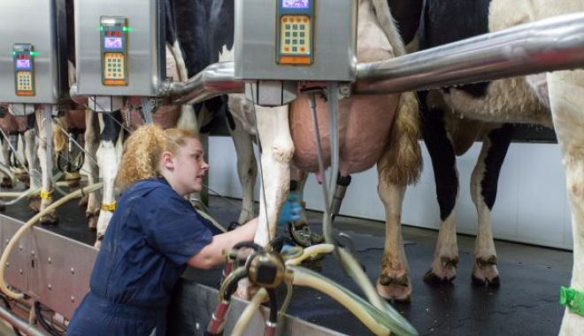 Foto: Iată până la de data se poate solicita ajutorul pentru creșterea animalelor
