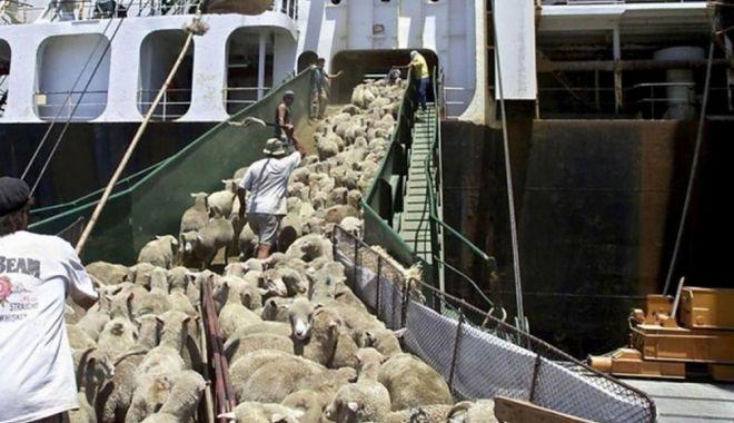 Noi măsuri pentru comerţul cu animale vii - noimasuri-1618334793.jpg