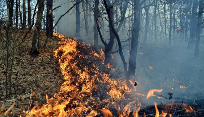 Foto: Num�rul incendiilor provocate inten�ionat �n jude�ul Constan�a, �n cre�tere