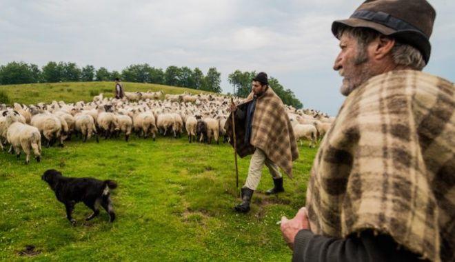 Foto: Nu subestima niciodată ciobanul român