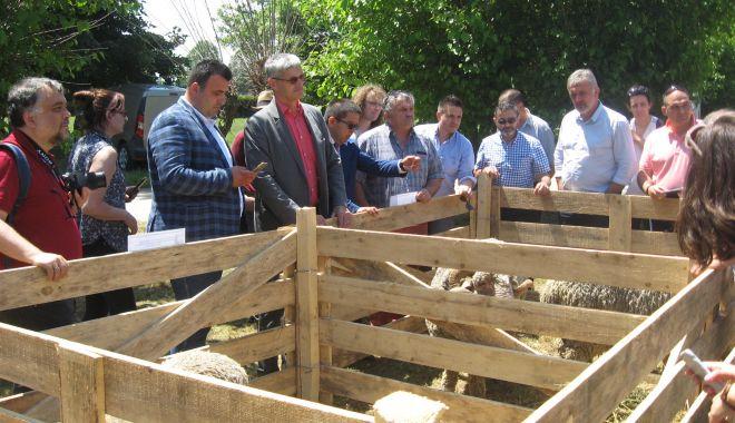 Oile crescătorilor din Dobrogea au intrat în atenția francezilor - oileprintcrescatorilordindobroge-1559767399.jpg