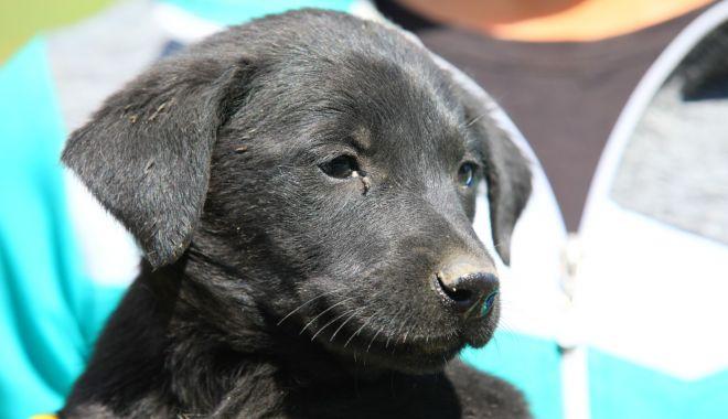 O nouă etapă de sterilizare a câinilor fără stăpân - onouaetapa-1623953390.jpg