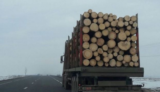 Tânără amendată pentru că a semnalat un posibil furt de lemne - otanaradiniasiafostamendatapentr-1510869395.jpg