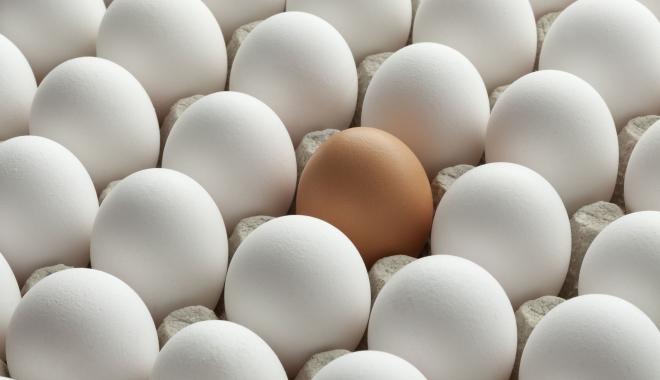 Foto: Milioane de ouă, retrase de pe piaţă, după ce au fost contaminate cu pesticid