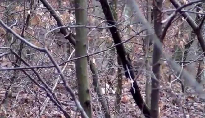 Foto: Poliţist găsit mort într-o pădure. Lângă cadavru, o sticlă cu o substanţă necunoscută