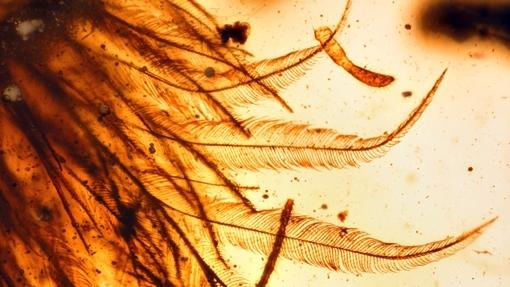 Foto: O pană de la o pasăre care a trăit pe vremea dinozaurilor, descoperită conservată într-un chihlimbar