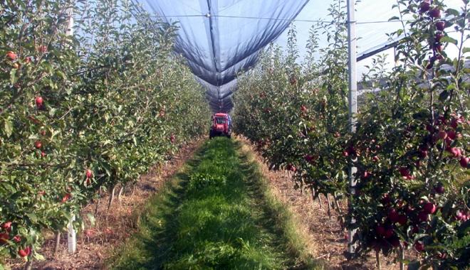 Foto: Până când se poate solicita finanţare pentru fermele mici şi exploataţiile pomicole