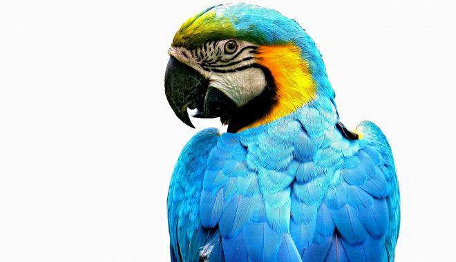 Foto: Papagalul vorbește mai multe limbi!