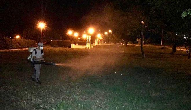 Foto: Parcurile din oraș, stropite împotriva insectelor de angajații primăriei