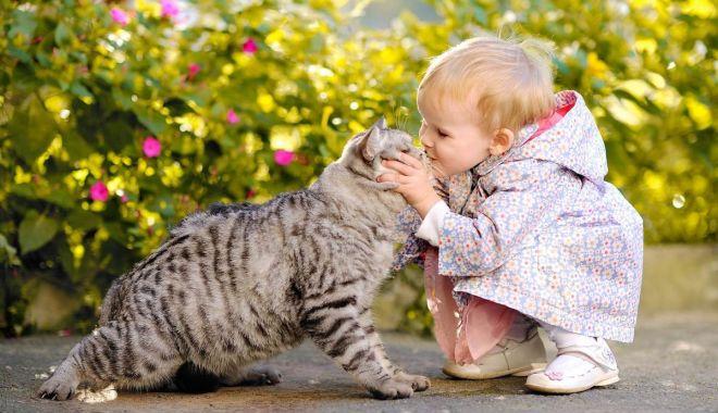 Foto: Părul de pisică este periculos doar în anumite situații