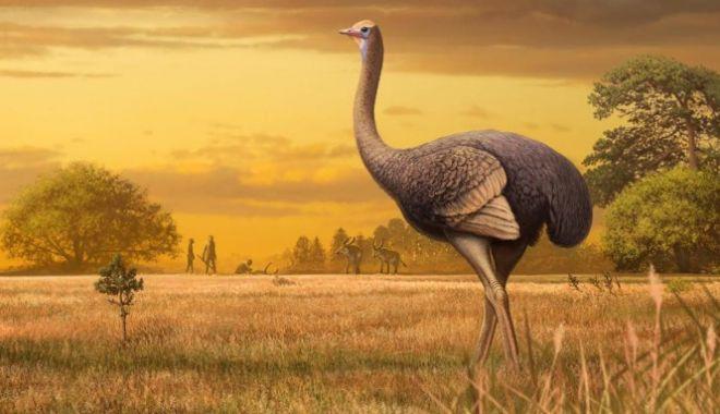 Foto: Rămășițele unei păsări uriașe au fost descoperite în nordul Mării Negre. Ea trăiă în urmă cu 2 milioane de ani