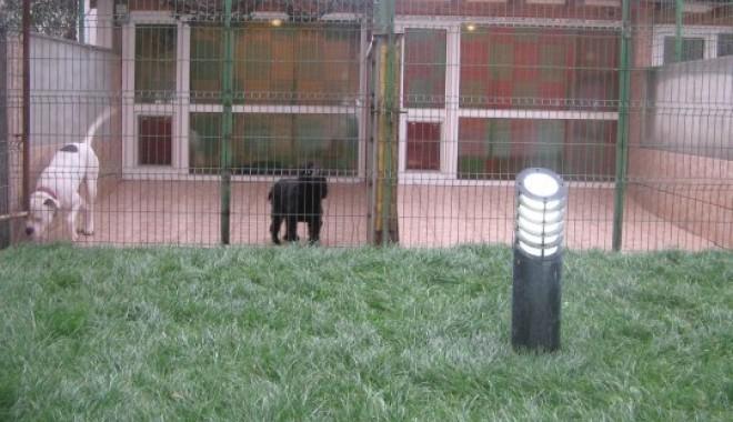 Câinele se acomodează la o pensiune canină - pensiunecaninabellaa-1346446168.jpg