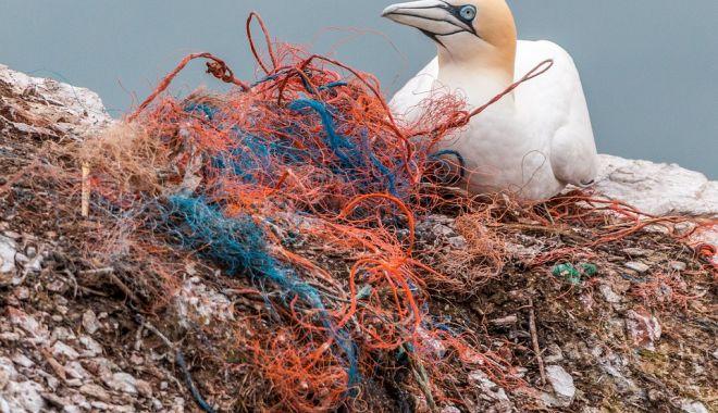 Pescuitul - sursă de poluare a mărilor - pescuitulsursadepoluareamarilor3-1622743312.jpg