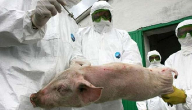 Foto: Petre Daea dă vina pe Iohannis, în scandalul pestei porcine