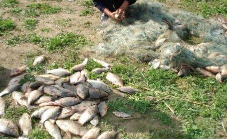 Foto: Plase monofilament şi sute de kilograme de peşte, confiscate