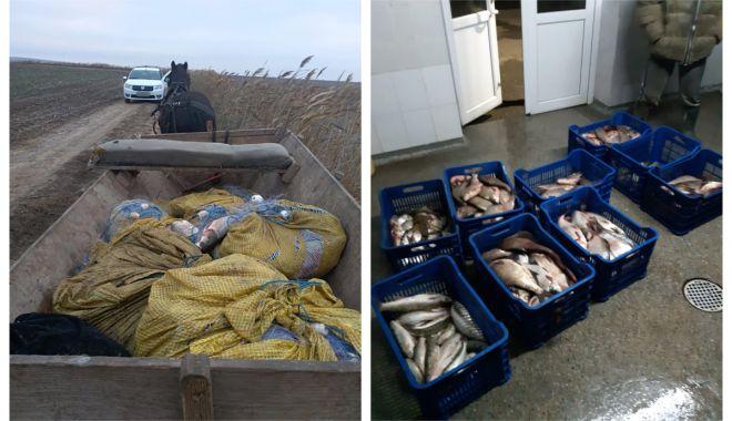Peşte fără documente legale şi plase monofilament, confiscate de poliţiştii de frontieră tulceni - peste-1543421857.jpg
