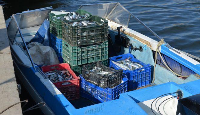 Foto: Peste 360 kilograme de peşte fără documente legale, confiscate de poliţiştii de frontieră