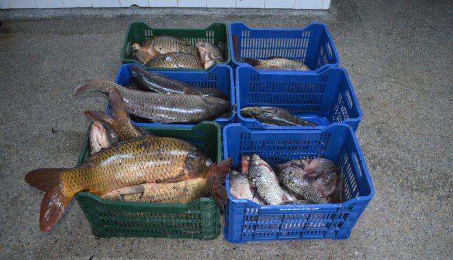 Foto: Peste 100 kg peşte fără documente legale, confiscate de poliţişti