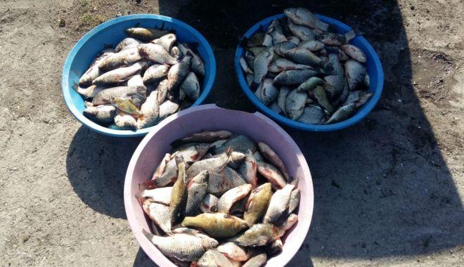 Foto: Pește confiscat de polițiștii de frontieră din Constanţa