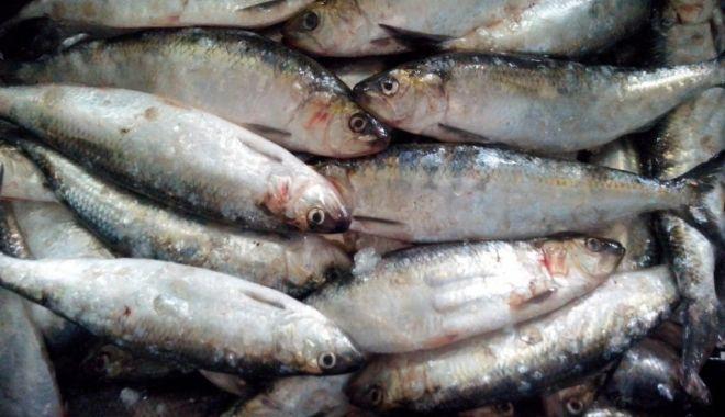 Foto: Polițiștii de frontieră au confiscat 80 de kg de pește