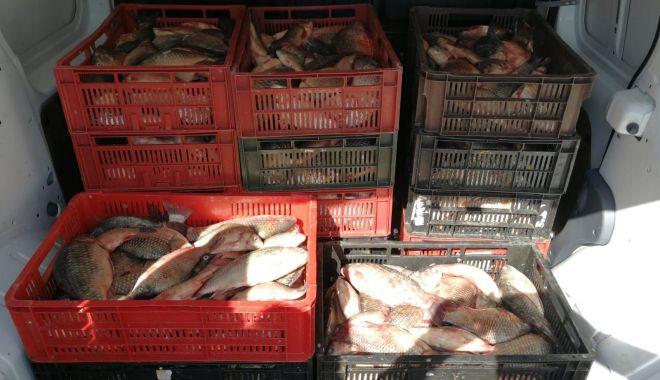 Foto: Peste 200 kg de pește au fost confiscate de polițiștii de frontieră