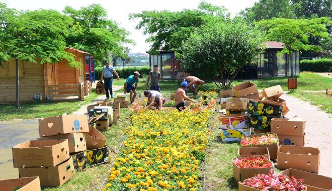 Foto: Peste 30 de mii de flori plantate în Parcul Tăbăcăriei