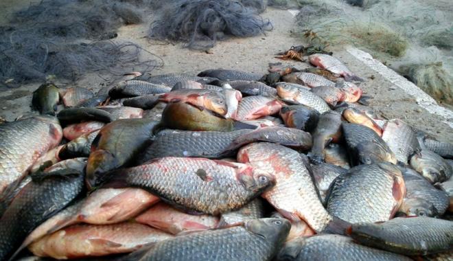 Foto: Un adolescent și un minor, prinși de polițiști cu peste 200 de kilograme de pește