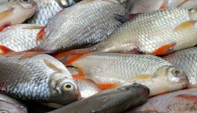 Foto: Aproximativ 50 kg peşte, confiscate de polițiștii de frontieră din Constanţa