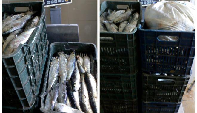 Foto: Peste 200 de kilograme de scrumbie, pescuite ilegal