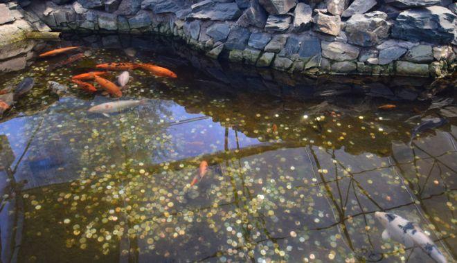 Fontana di Trevi de la Delfinariul din Constanța. Viața peștilor, în pericol din cauza superstițiilor - pesti15-1533051415.jpg