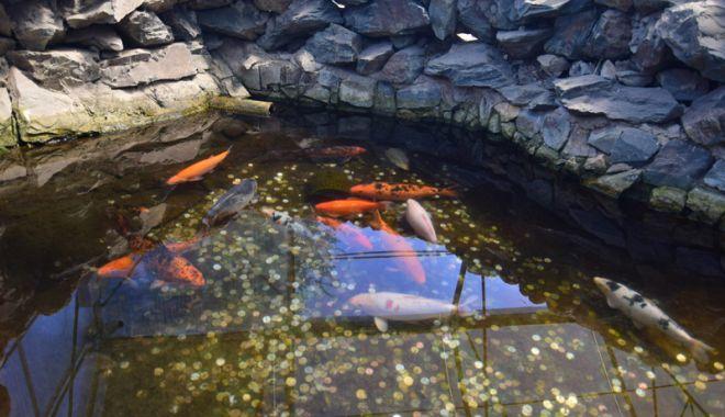 Fontana di Trevi de la Delfinariul din Constanța. Viața peștilor, în pericol din cauza superstițiilor - pesti16-1533051422.jpg