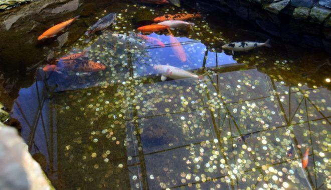 Fontana di Trevi de la Delfinariul din Constanța. Viața peștilor, în pericol din cauza superstițiilor - pesti17-1533051428.jpg