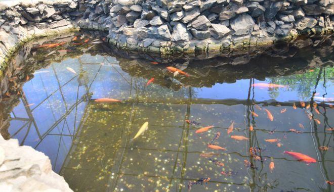 Fontana di Trevi de la Delfinariul din Constanța. Viața peștilor, în pericol din cauza superstițiilor - pesti4-1533051341.jpg