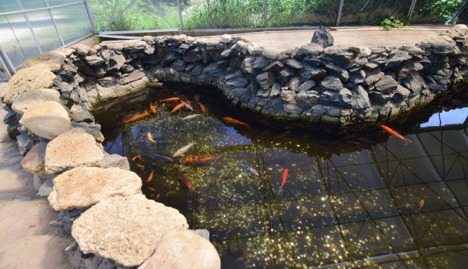 Fontana di Trevi de la Delfinariul din Constanța. Viața peștilor, în pericol din cauza superstițiilor - pesti6-1533051355.jpg