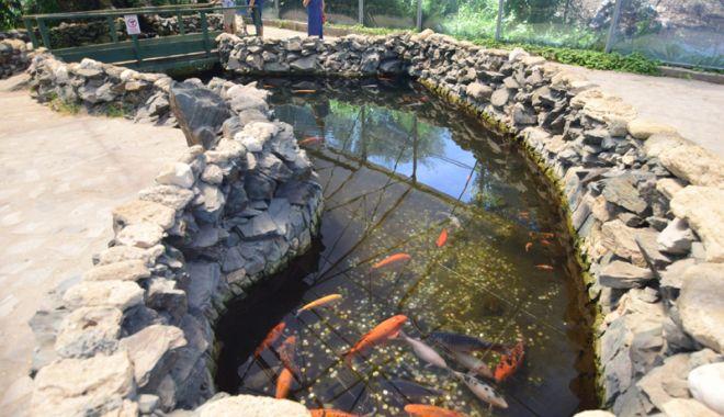 Fontana di Trevi de la Delfinariul din Constanța. Viața peștilor, în pericol din cauza superstițiilor - pesti8-1533051368.jpg