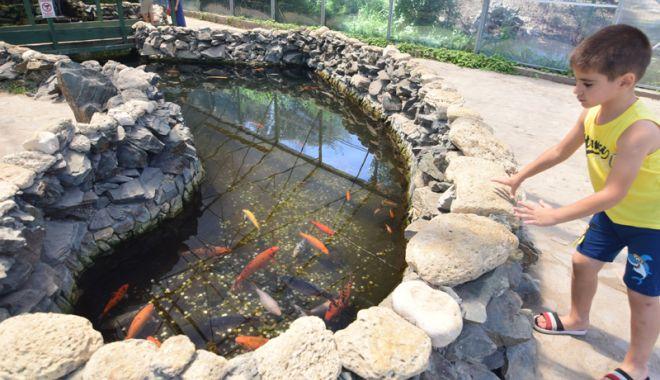 Fontana di Trevi de la Delfinariul din Constanța. Viața peștilor, în pericol din cauza superstițiilor - pesti9-1533051375.jpg