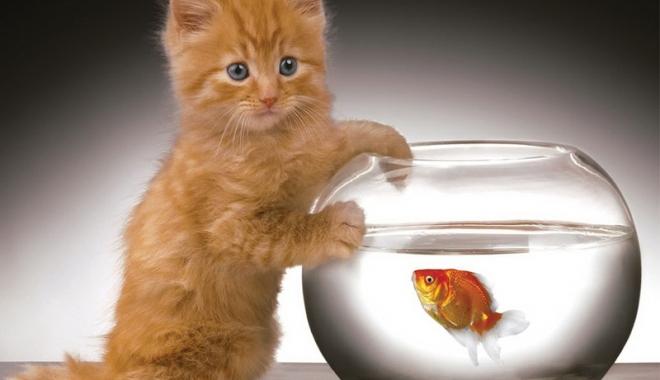 Foto: Peştişorul de aur, pus la zid