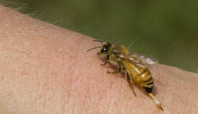 TRAGEDIE! Un bărbat a murit după ce a fost înțepat de viespi. Alți 20 de pacienți au ajuns la urgențe