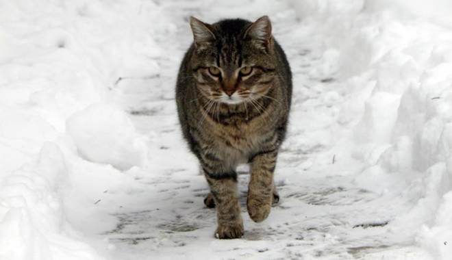 Foto: Pisica şi plimbarea de iarnă