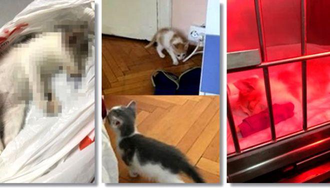 Foto: Tânărul acuzat că a omorât pisici adoptate A RECUNOSCUT TOTUL