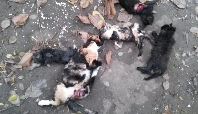 MASACRU în zona Abator: animale spintecate şi cu organele scoase! - pisicimoarte1-1382707761.jpg