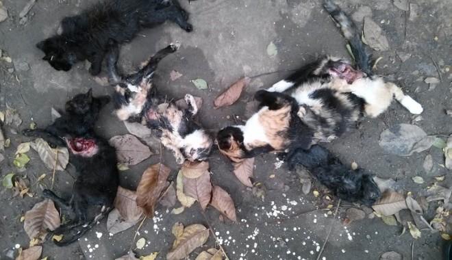 MASACRU în zona Abator: animale spintecate şi cu organele scoase! - pisicimoarte2-1382707747.jpg